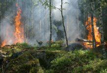 Požar na Ptuju. Slika je simbolična
