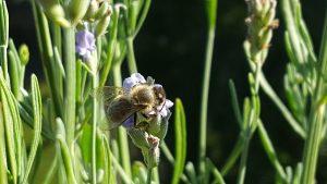 Čebele so del slovenske kulture