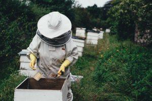 400.000 evrov za čebelarje