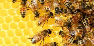 Razpis za čebelarje